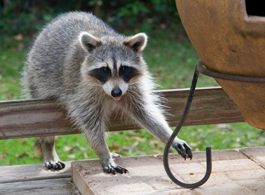 Get Professional Service of Animal Removal Wildlife