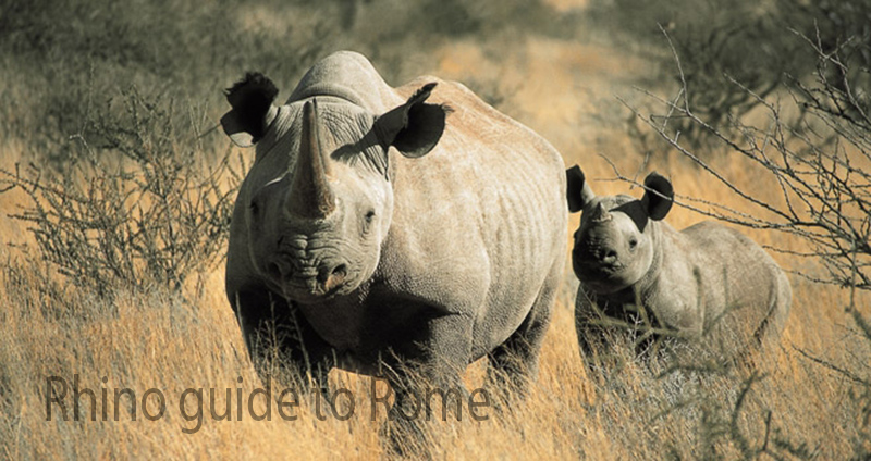 Rhino guide to Rome