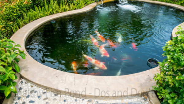 Healthy Fish Pond – Dos and Don'ts